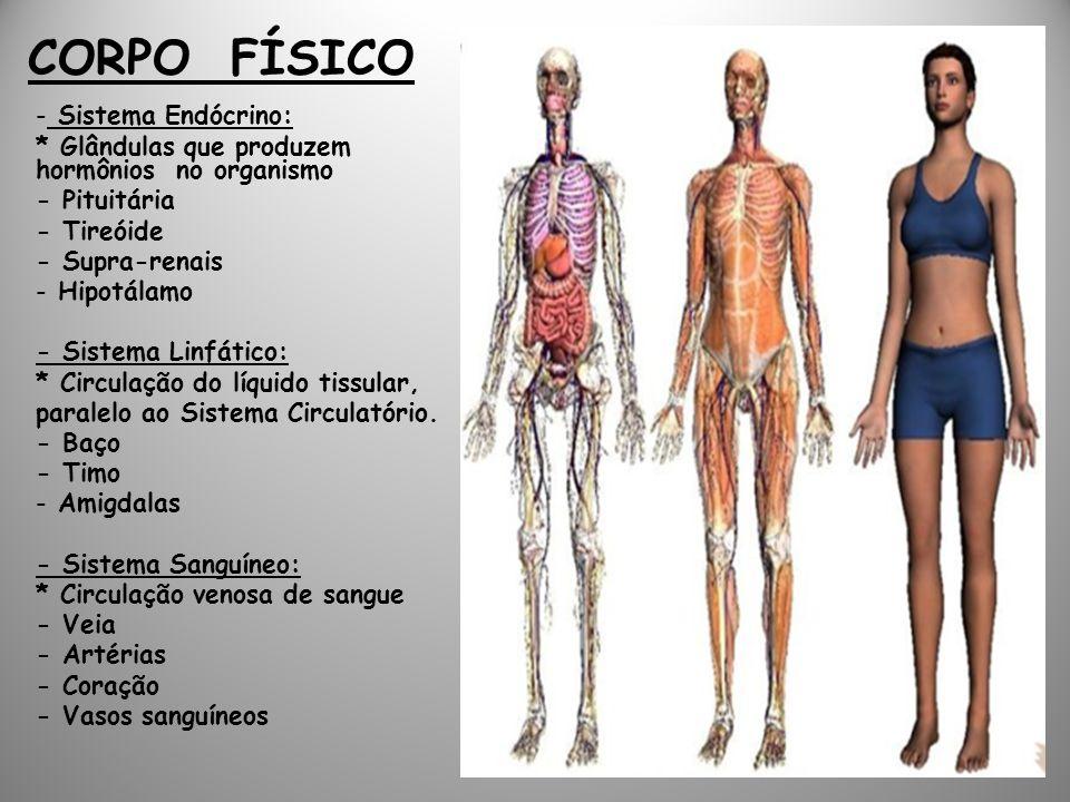 CORPO FÍSICO Sistema Endócrino:
