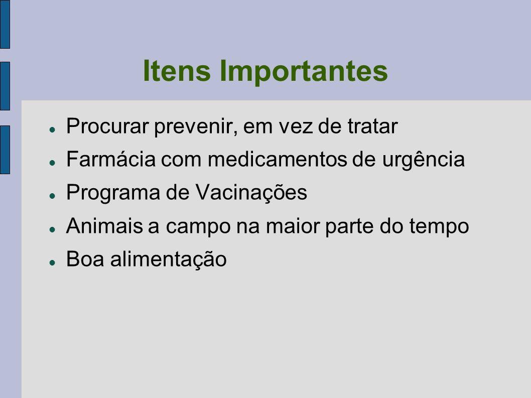 Itens Importantes Procurar prevenir, em vez de tratar
