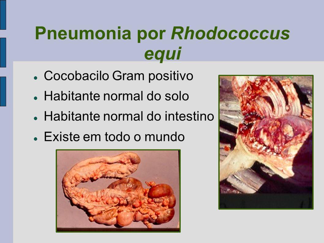 Pneumonia por Rhodococcus equi