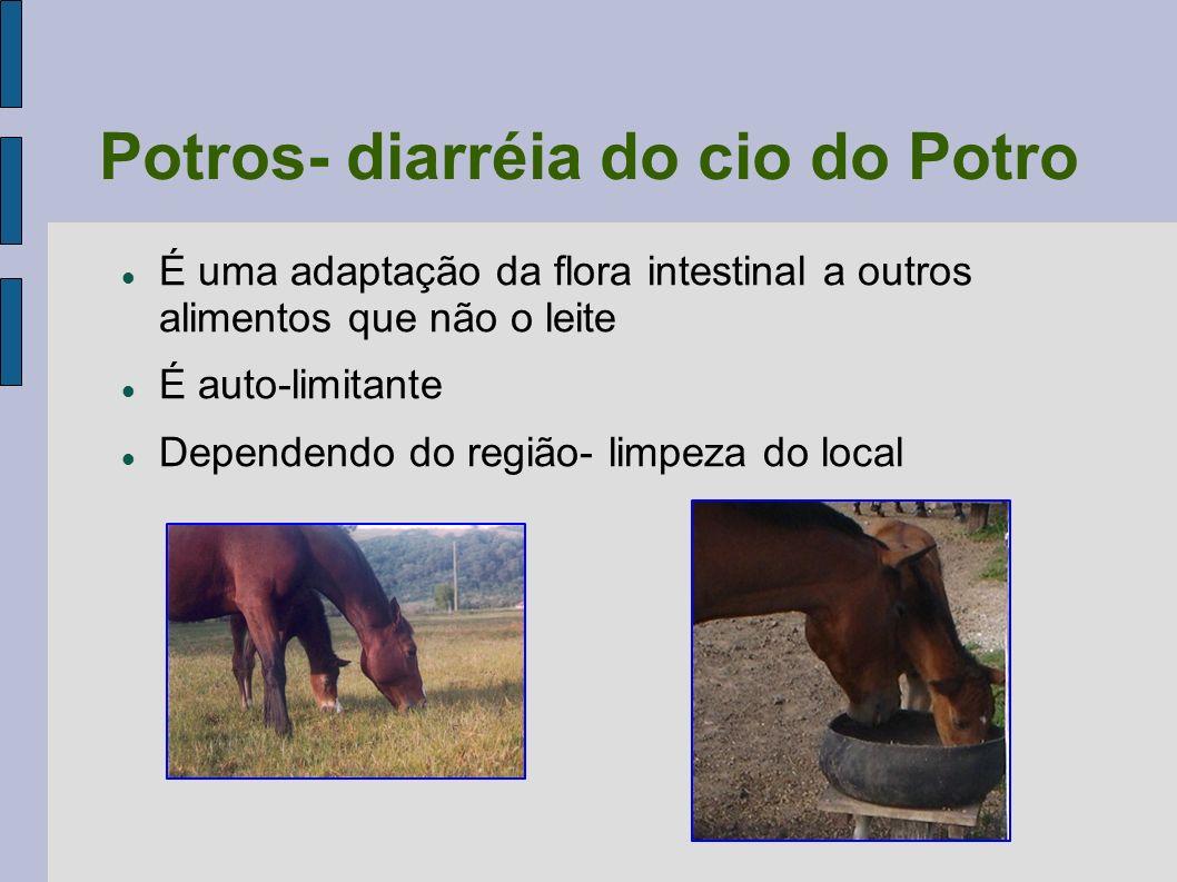 Potros- diarréia do cio do Potro