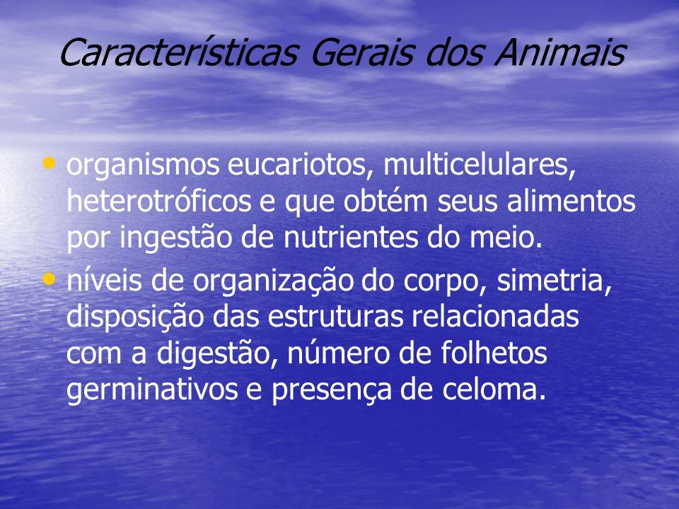 Características Gerais dos Animais