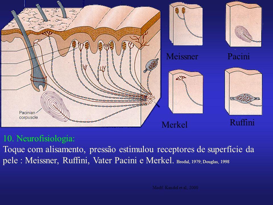 Meissner Pacini Ruffini Merkel 10. Neurofisiologia: