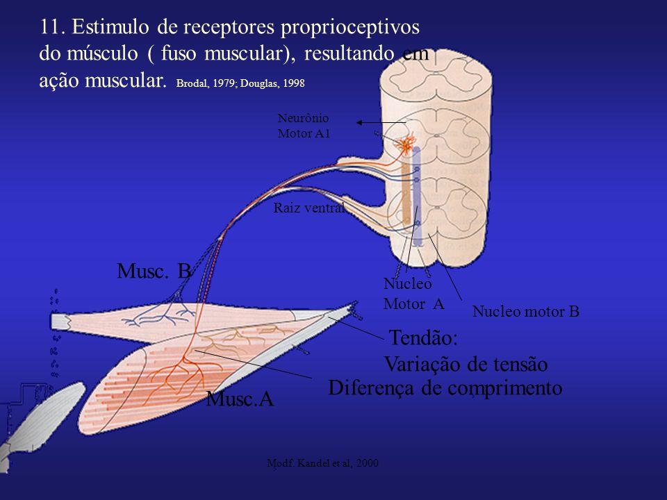 11. Estimulo de receptores proprioceptivos