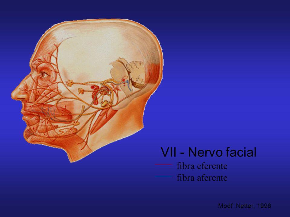 VII - Nervo facial fibra eferente fibra aferente Modf Netter, 1996