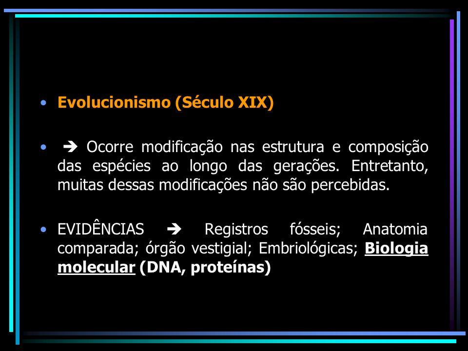 Evolucionismo (Século XIX)