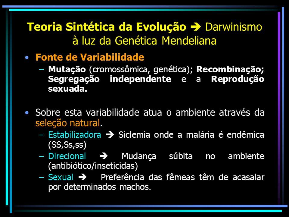 Teoria Sintética da Evolução  Darwinismo à luz da Genética Mendeliana