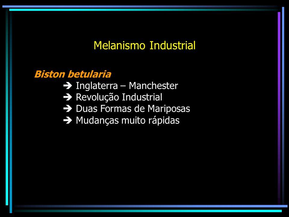 Melanismo Industrial Biston betularia  Inglaterra – Manchester