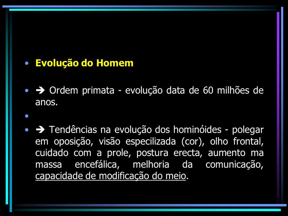 Evolução do Homem  Ordem primata - evolução data de 60 milhões de anos.