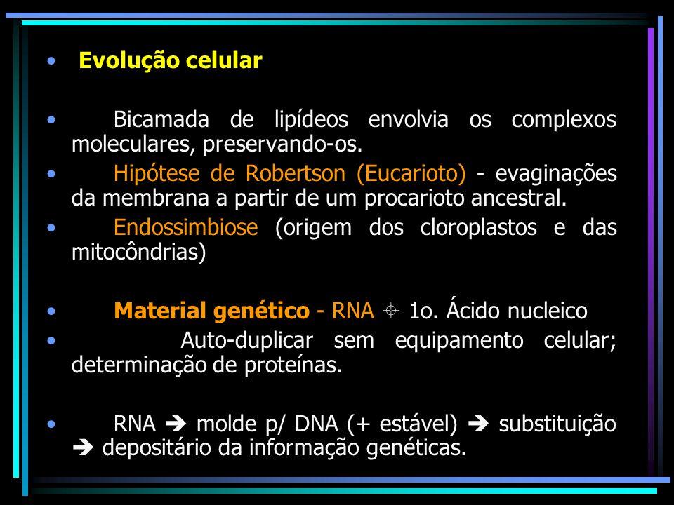 Evolução celular Bicamada de lipídeos envolvia os complexos moleculares, preservando-os.