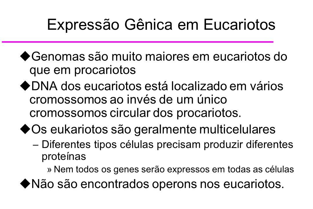Expressão Gênica em Eucariotos
