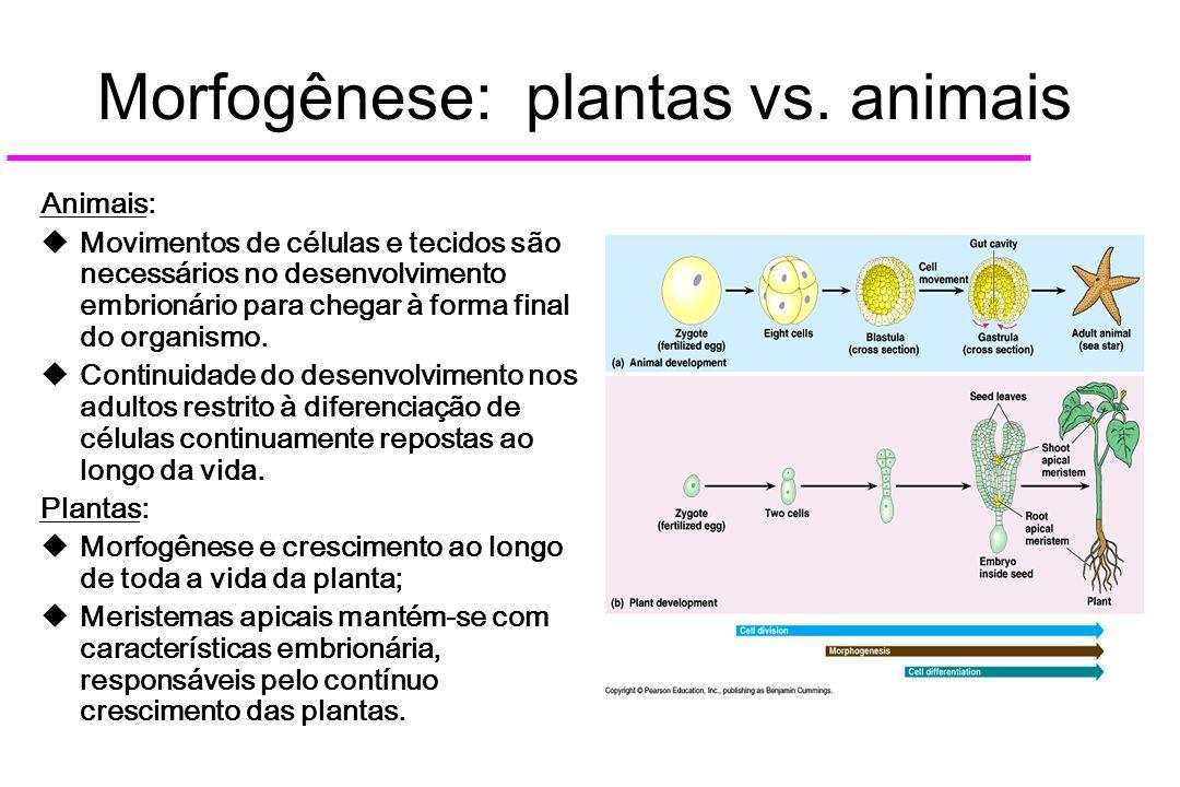 Morfogênese: plantas vs. animais