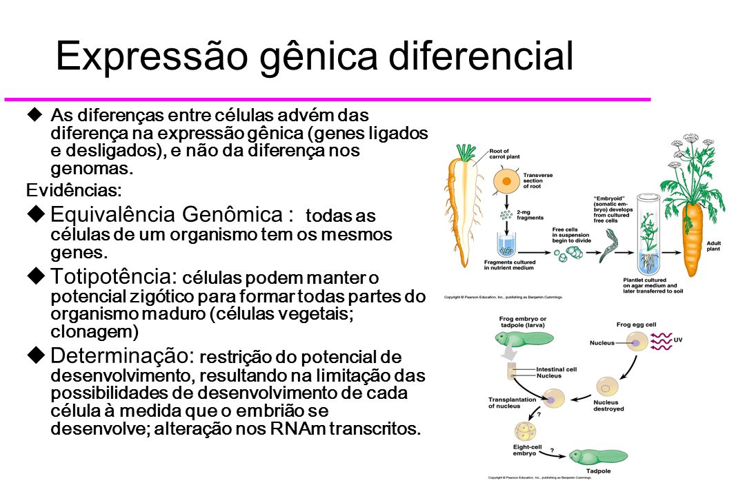 Expressão gênica diferencial