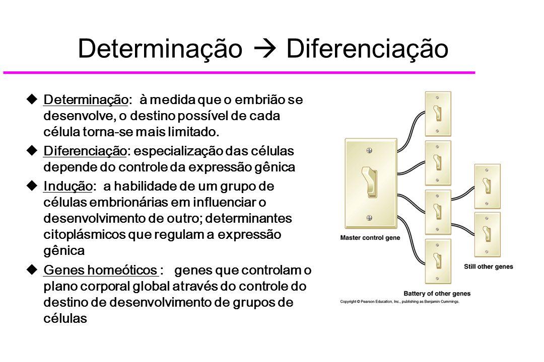 Determinação  Diferenciação