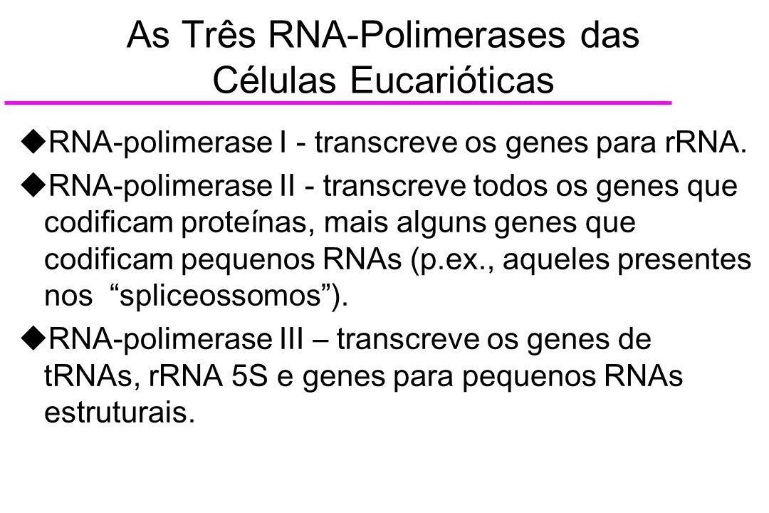 As Três RNA-Polimerases das Células Eucarióticas