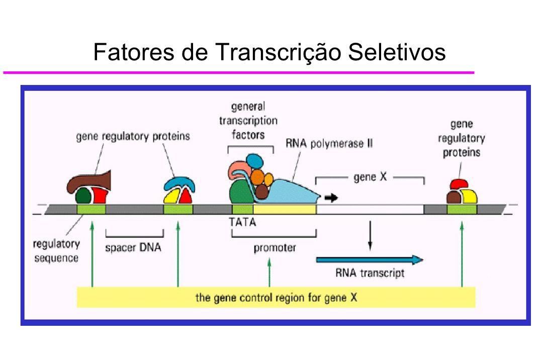Fatores de Transcrição Seletivos
