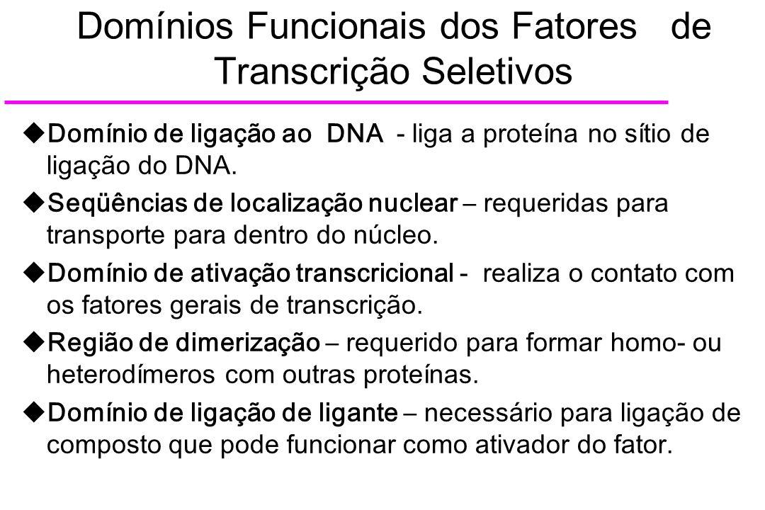 Domínios Funcionais dos Fatores de Transcrição Seletivos