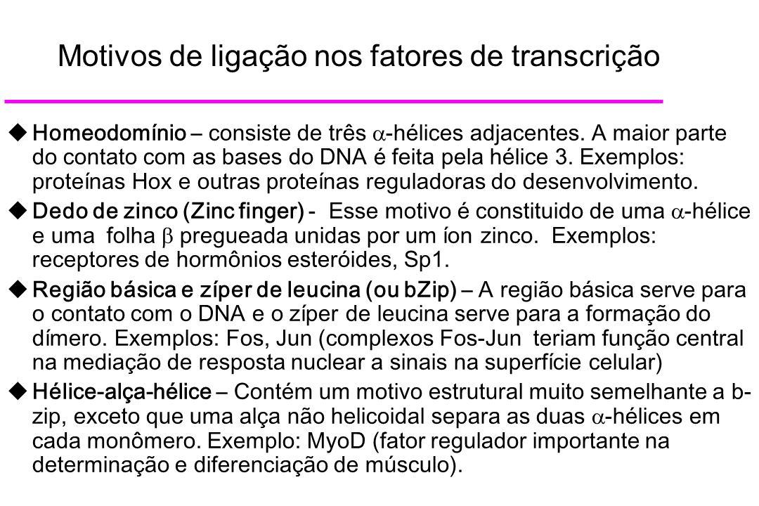 Motivos de ligação nos fatores de transcrição