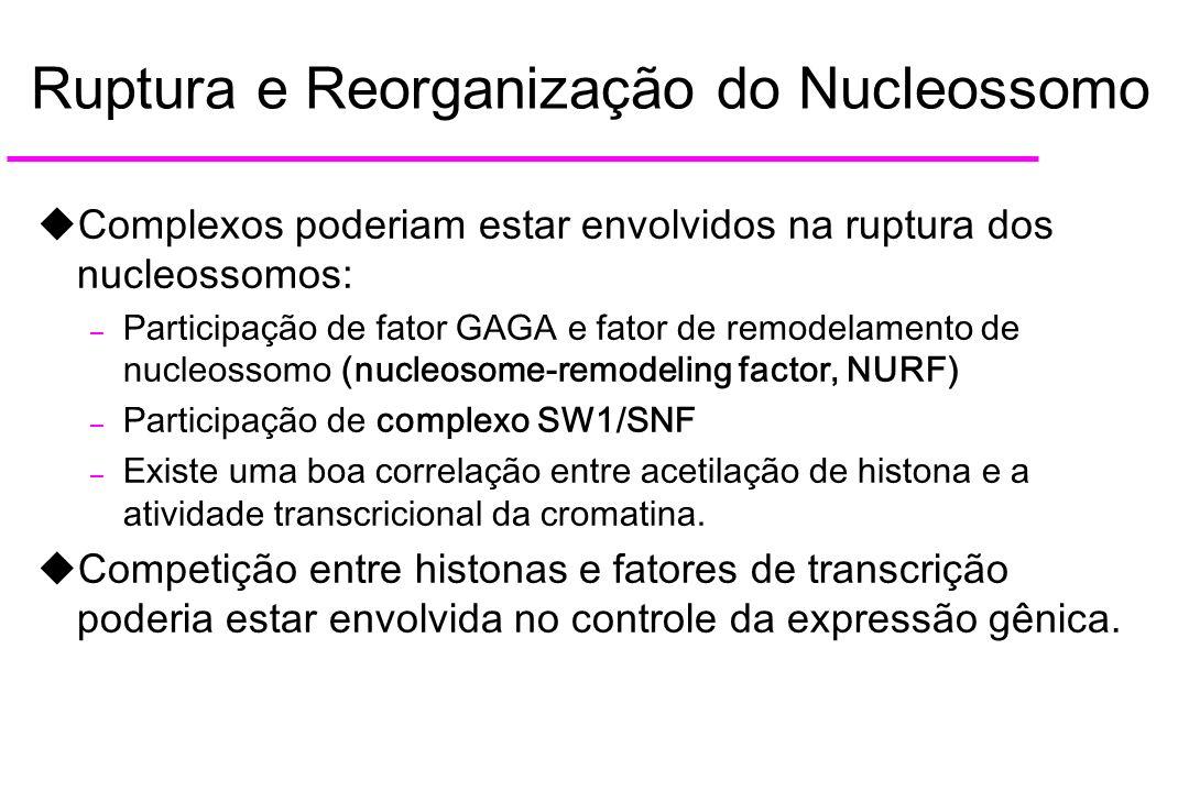 Ruptura e Reorganização do Nucleossomo