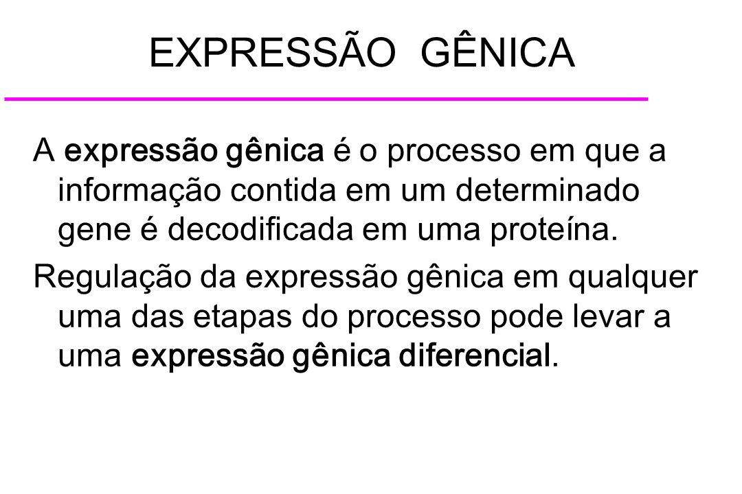 EXPRESSÃO GÊNICA A expressão gênica é o processo em que a informação contida em um determinado gene é decodificada em uma proteína.