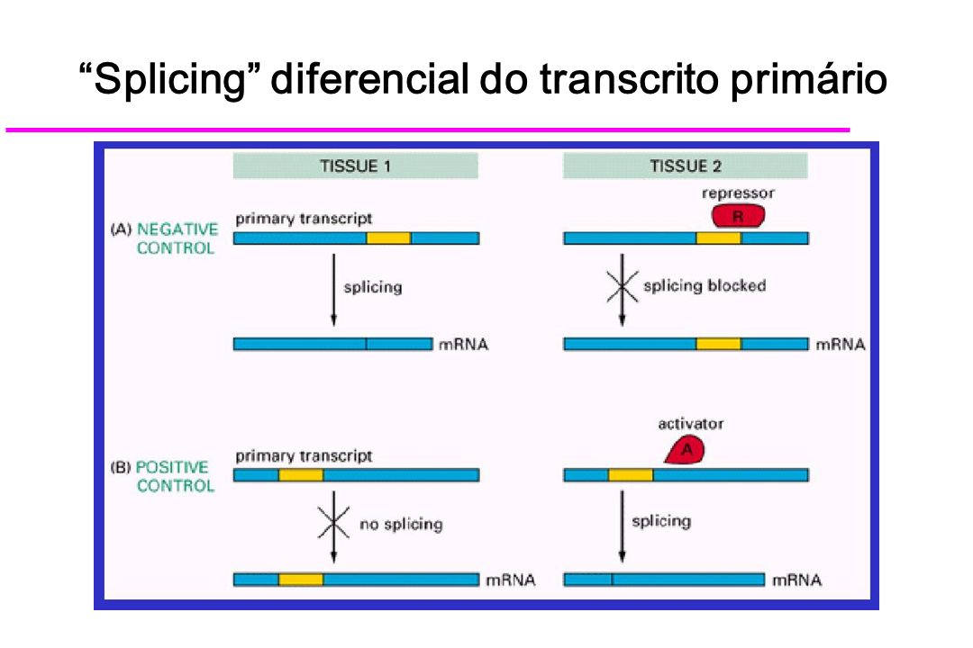 Splicing diferencial do transcrito primário
