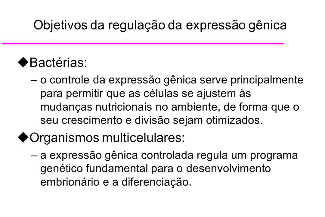 Objetivos da regulação da expressão gênica