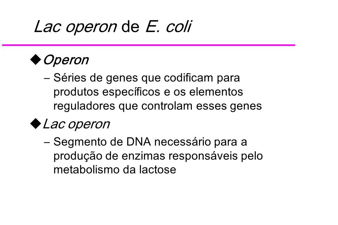 Lac operon de E. coli Operon Lac operon