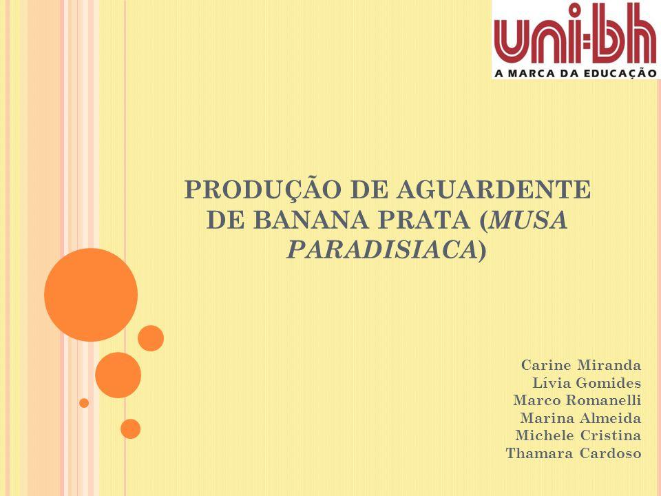 PRODUÇÃO DE AGUARDENTE DE BANANA PRATA (MUSA PARADISIACA)