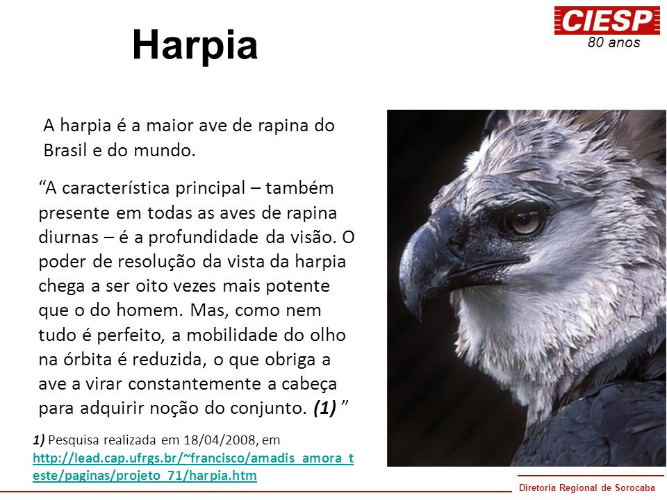 Harpia A harpia é a maior ave de rapina do Brasil e do mundo.