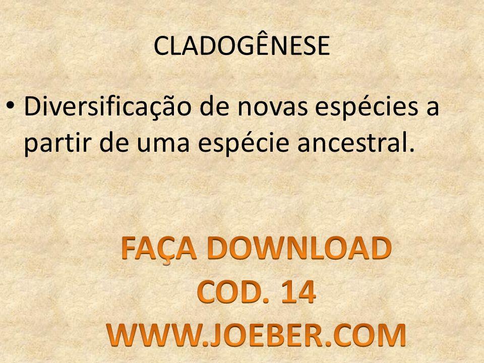 FAÇA DOWNLOAD COD. 14 WWW.JOEBER.COM