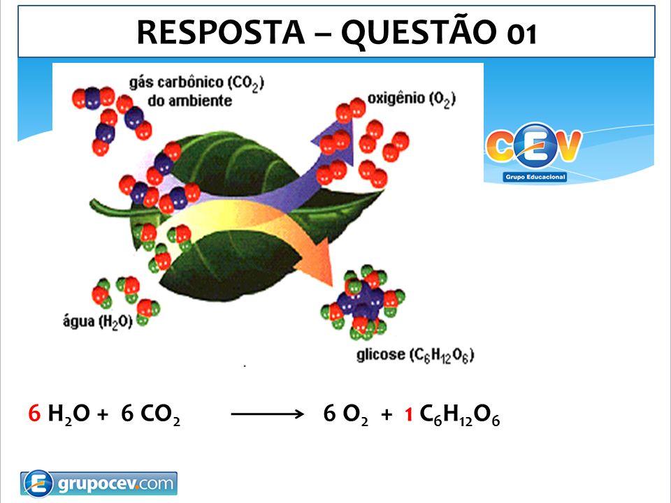 RESPOSTA – QUESTÃO 01 6 H2O + 6 CO2 6 O2 + 1 C6H12O6