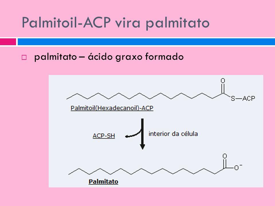 Palmitoil-ACP vira palmitato