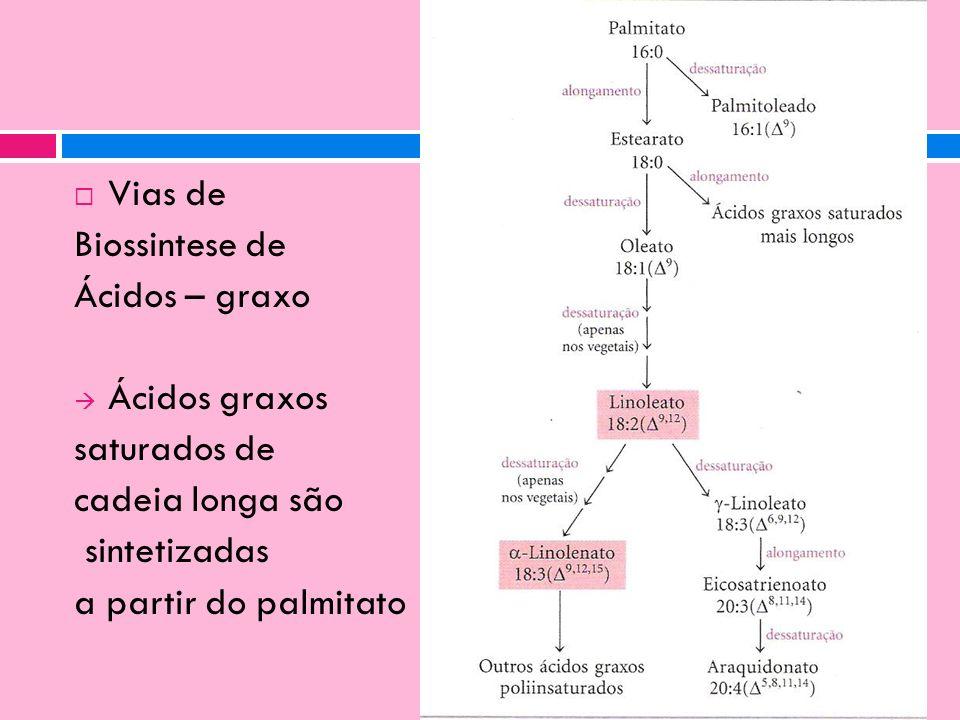 Vias de Biossintese de. Ácidos – graxo. Ácidos graxos. saturados de. cadeia longa são. sintetizadas.