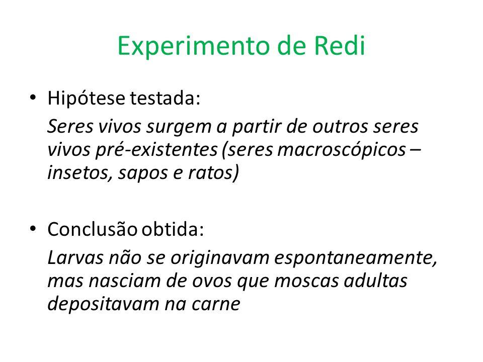 Experimento de Redi Hipótese testada: