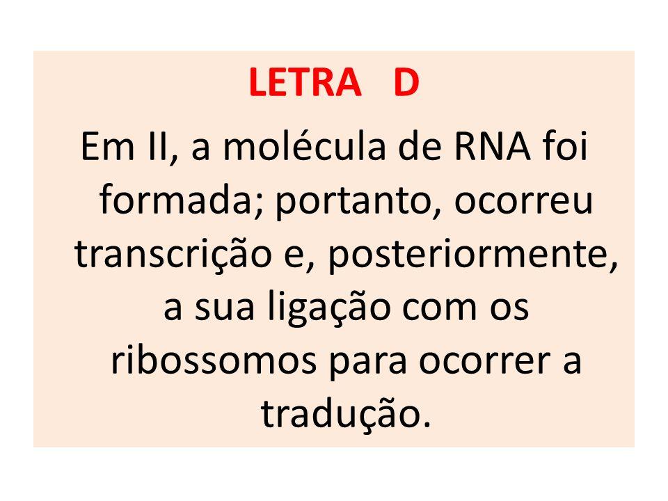 LETRA D Em II, a molécula de RNA foi formada; portanto, ocorreu transcrição e, posteriormente, a sua ligação com os ribossomos para ocorrer a tradução.
