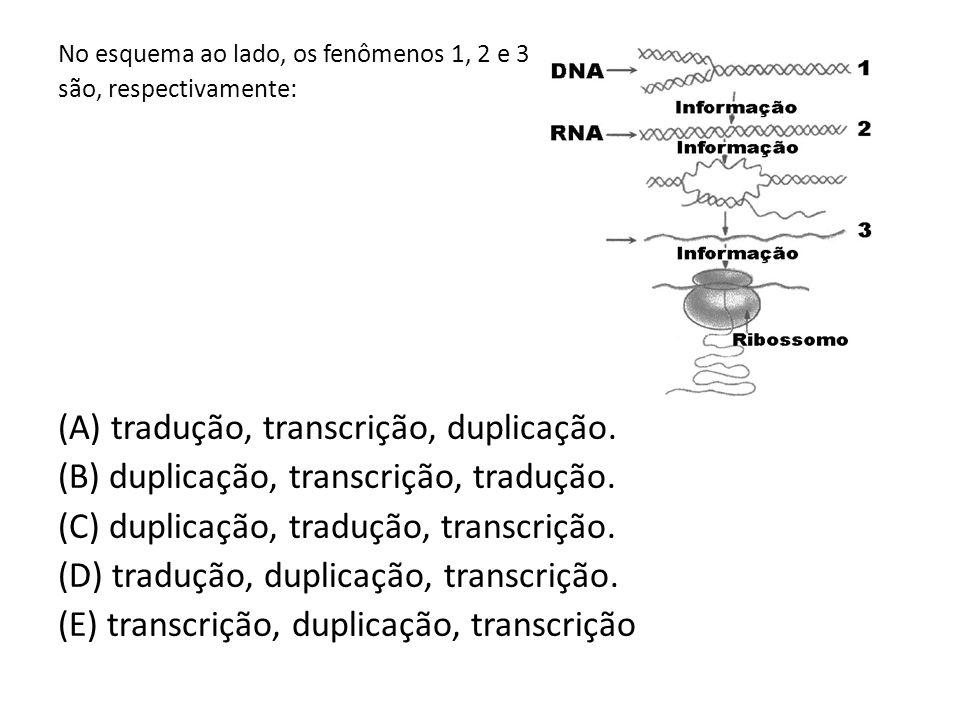(A) tradução, transcrição, duplicação.