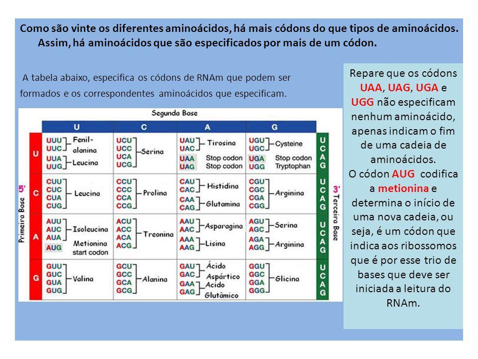 A tabela abaixo, especifica os códons de RNAm que podem ser