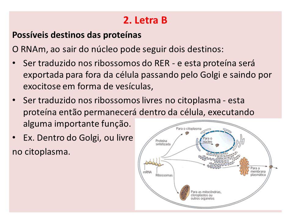 2. Letra B Possíveis destinos das proteínas