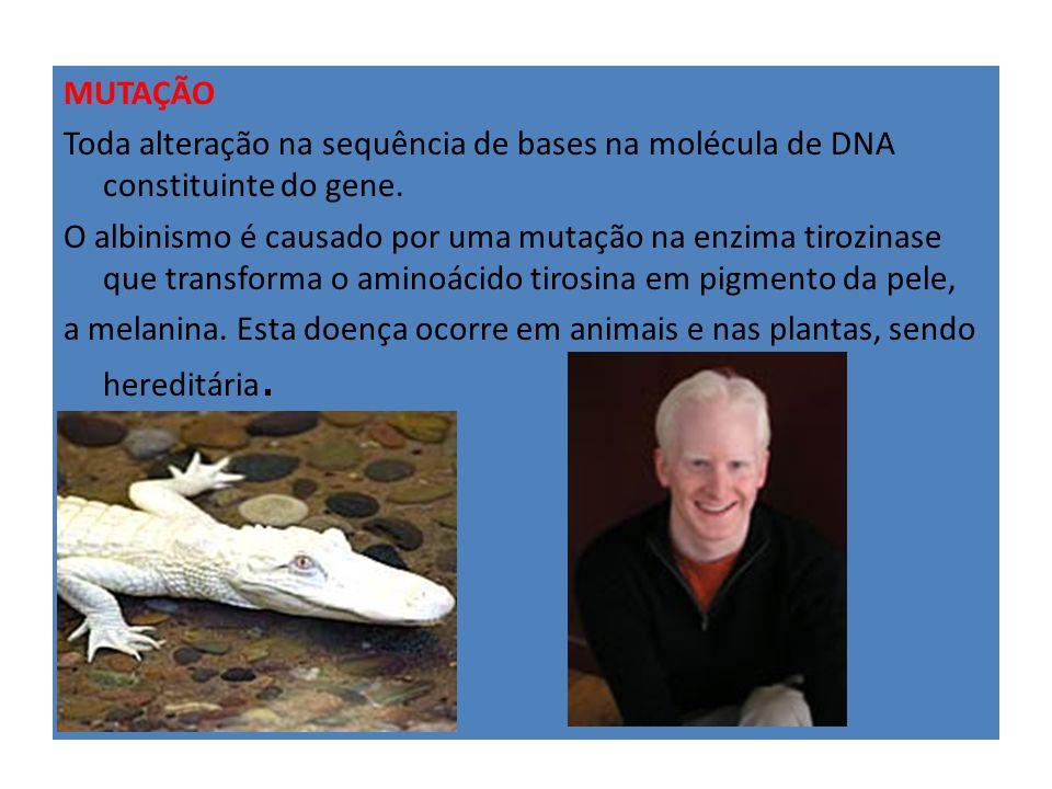 MUTAÇÃO Toda alteração na sequência de bases na molécula de DNA constituinte do gene.