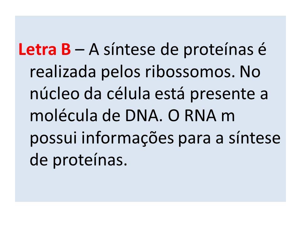Letra B – A síntese de proteínas é realizada pelos ribossomos