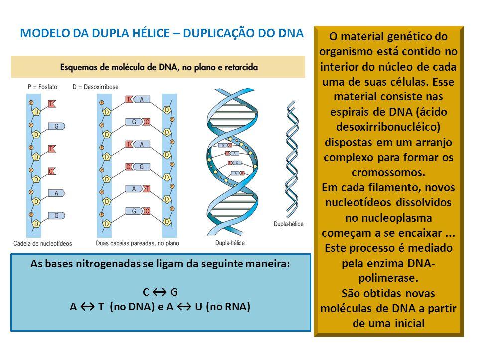 MODELO DA DUPLA HÉLICE – DUPLICAÇÃO DO DNA