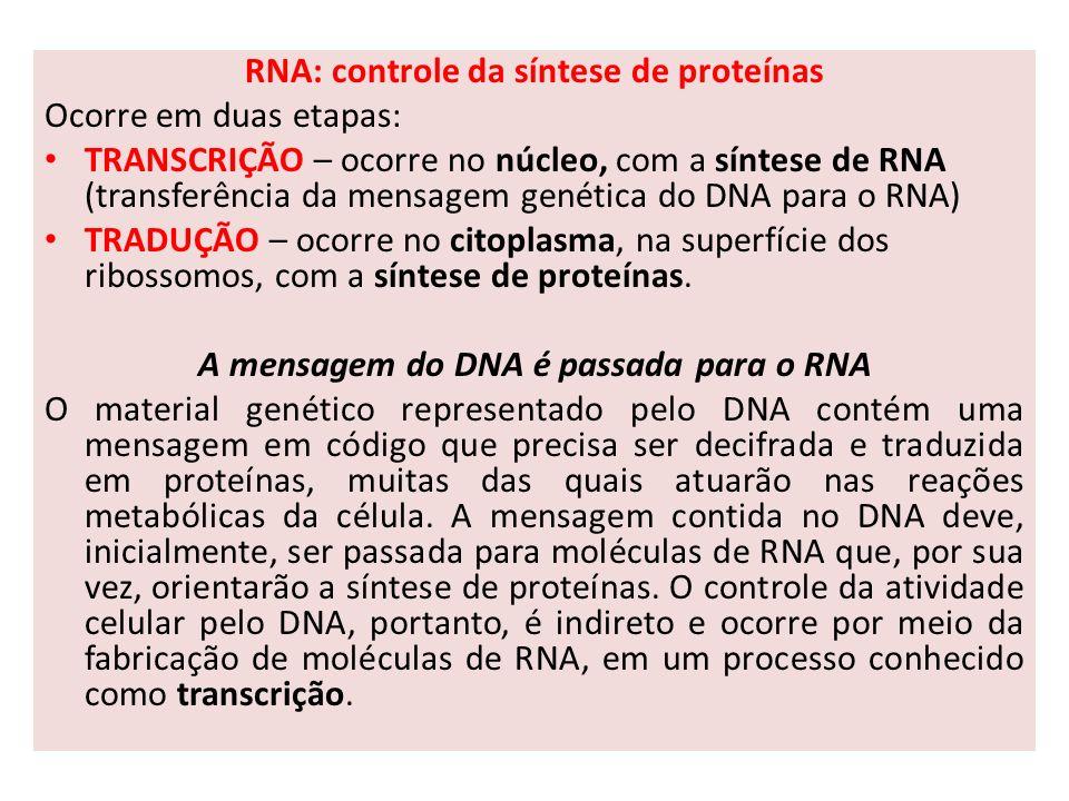 RNA: controle da síntese de proteínas Ocorre em duas etapas: