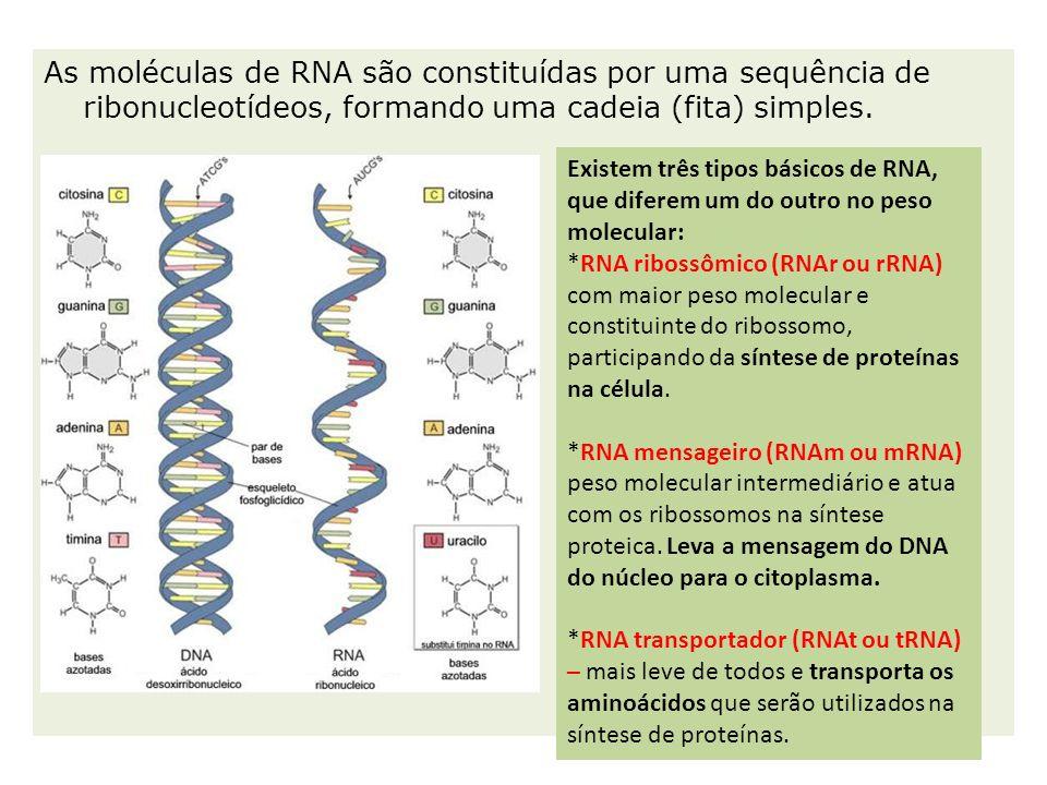 As moléculas de RNA são constituídas por uma sequência de ribonucleotídeos, formando uma cadeia (fita) simples.