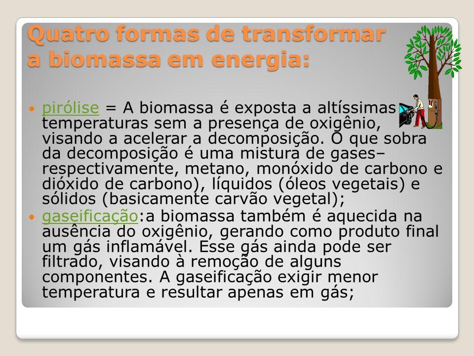 Quatro formas de transformar a biomassa em energia: