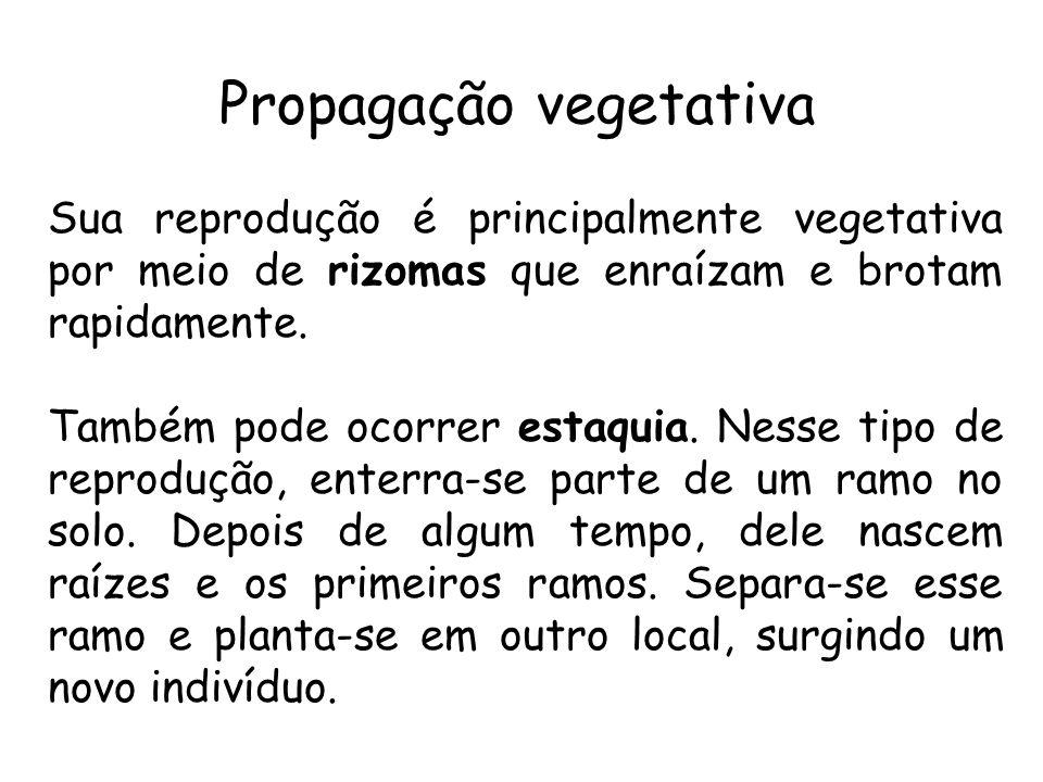 Propagação vegetativa