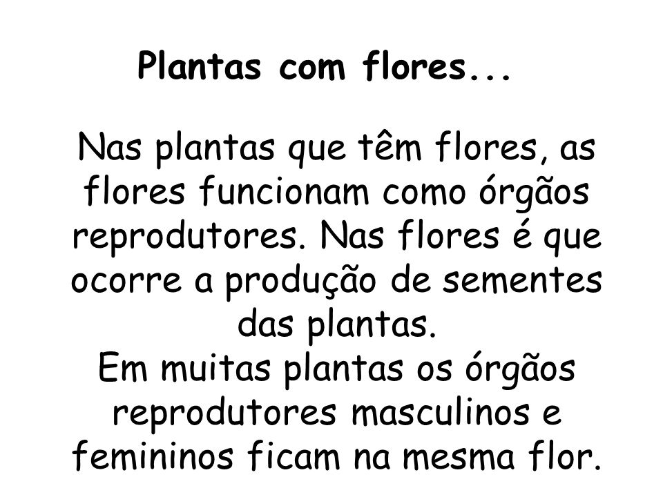 Plantas com flores...