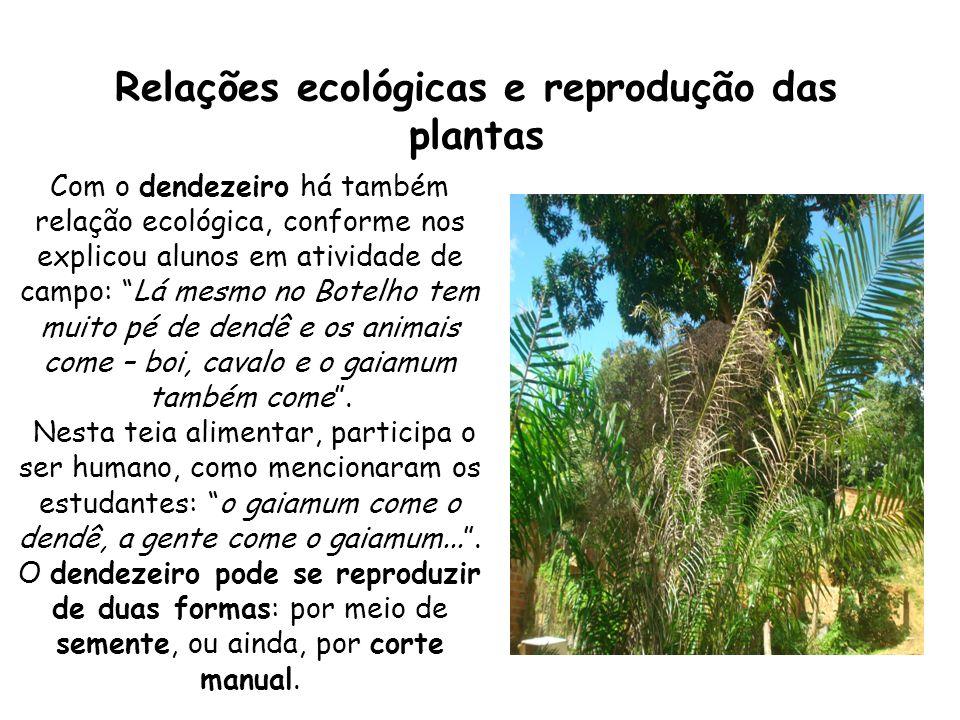 Relações ecológicas e reprodução das plantas