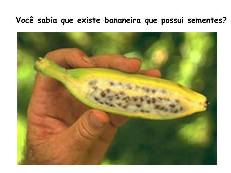 Você sabia que existe bananeira que possui sementes