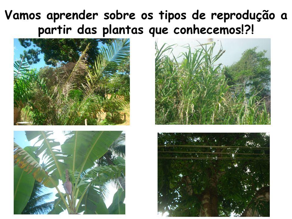 Vamos aprender sobre os tipos de reprodução a partir das plantas que conhecemos! !