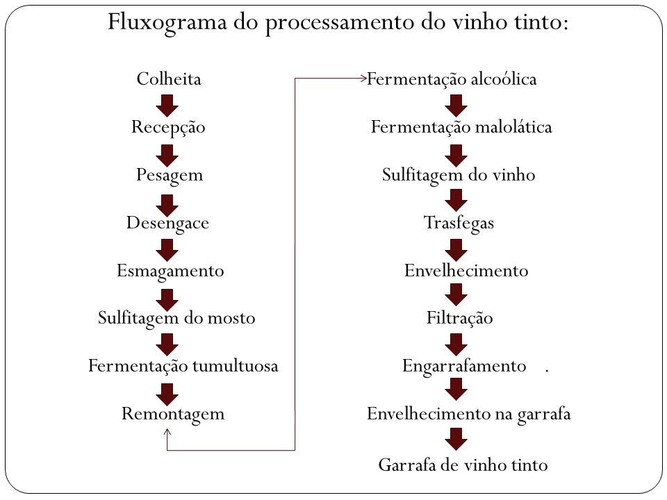 Fluxograma do processamento do vinho tinto: