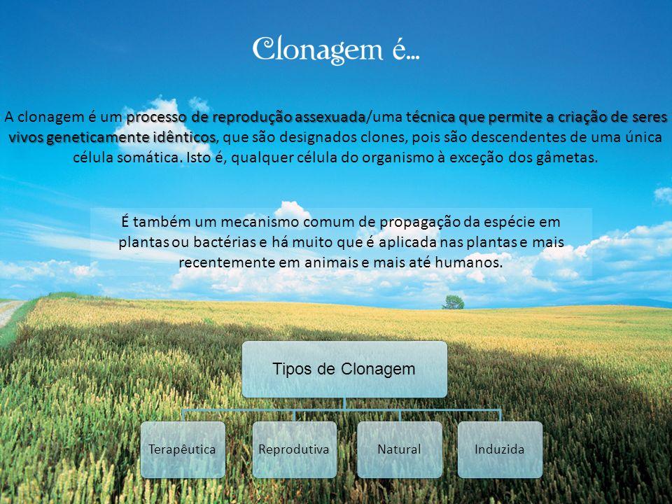 A clonagem é um processo de reprodução assexuada/uma técnica que permite a criação de seres vivos geneticamente idênticos, que são designados clones, pois são descendentes de uma única célula somática. Isto é, qualquer célula do organismo à exceção dos gâmetas.